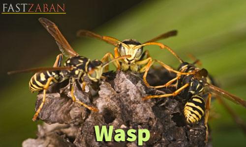 آموزش تصویری ۵۰۴ - کلمه wasp